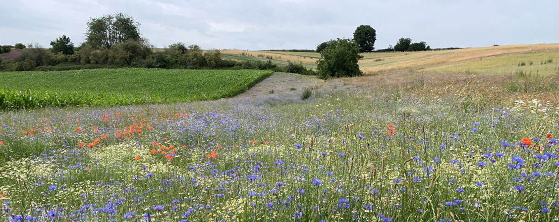 Beheerovereenkomsten voor soortenbescherming zitten in de lift, bloemenstrook neemt vlucht vooruit