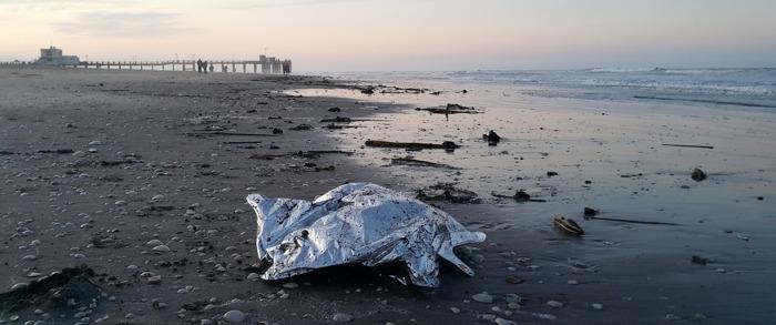En 2019, la falta de alimento y la contaminación fueron las principales amenazas de la fauna marina