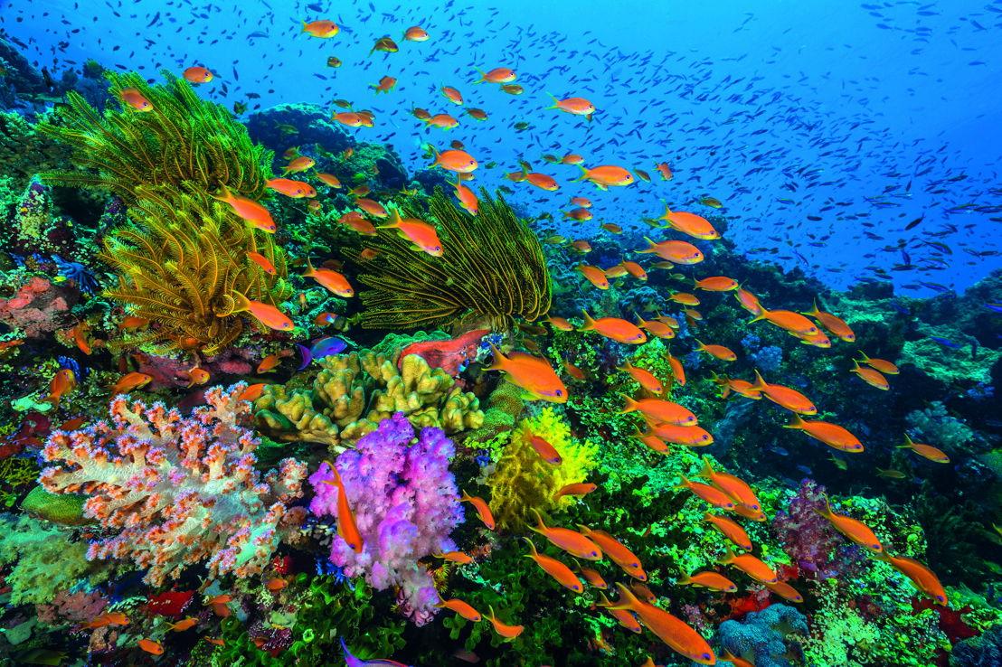 Afl 3: Coral Reefs - (c) BBC