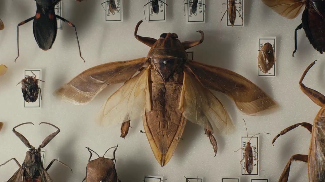 Een verzameling voor de eeuwigheid - insecten