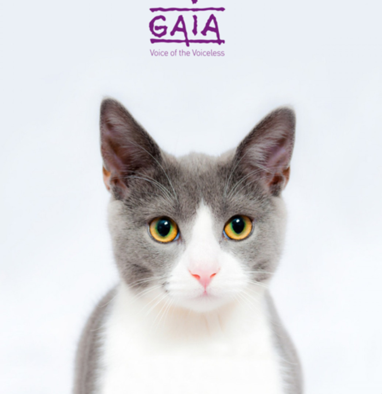 PERSBERICHT // Kamer stemt btw-verlaging kattensterilisatie