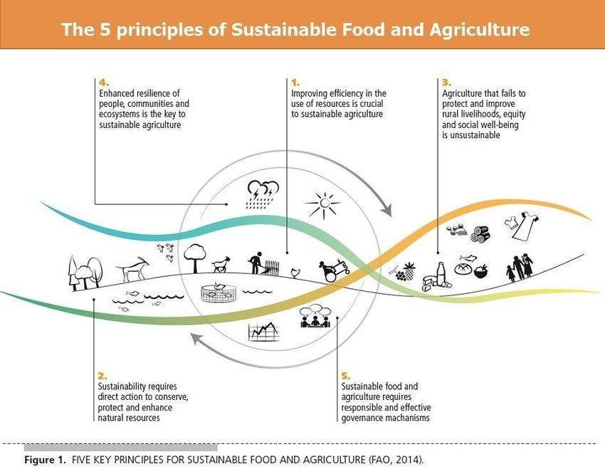 Image: FAO