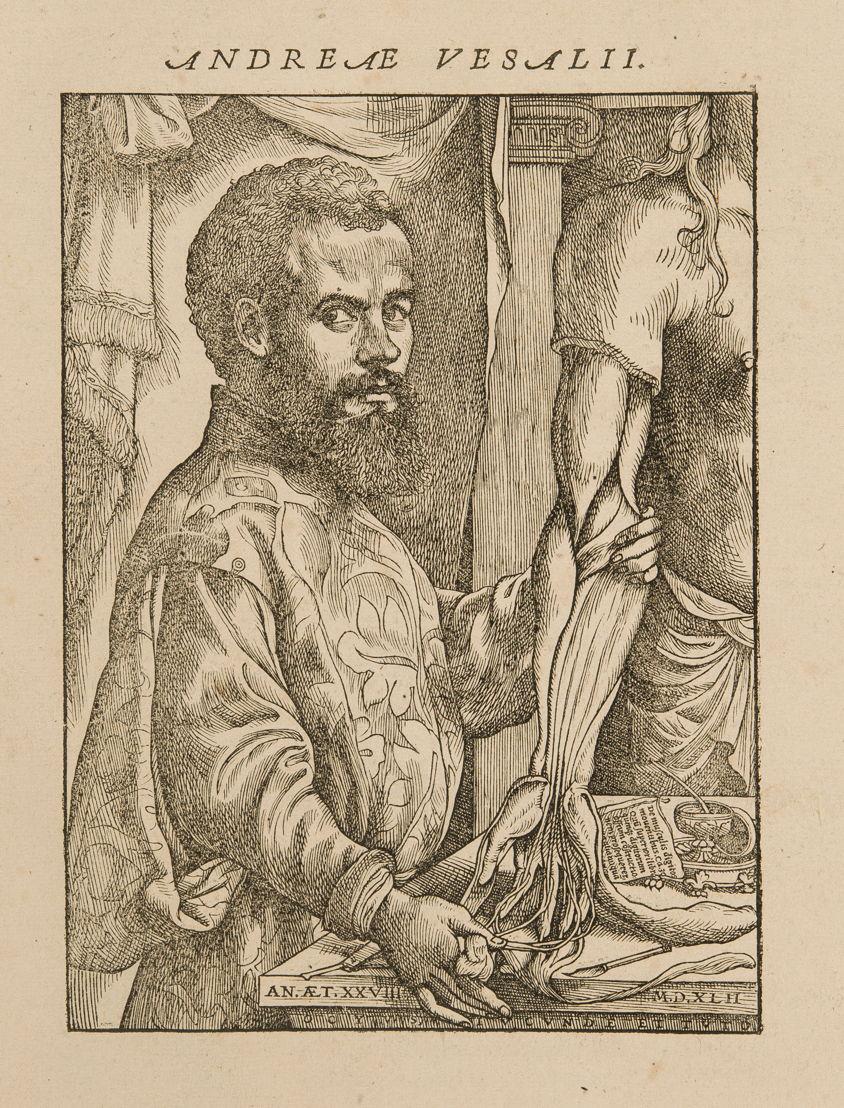 Andreas Vesalius, De Humani Corporis Fabrica Libri Septem, Basel, 1543 ©  KU Leuven, Universiteitsbibliotheek, CaaC17 - Bruno Vandermeulen