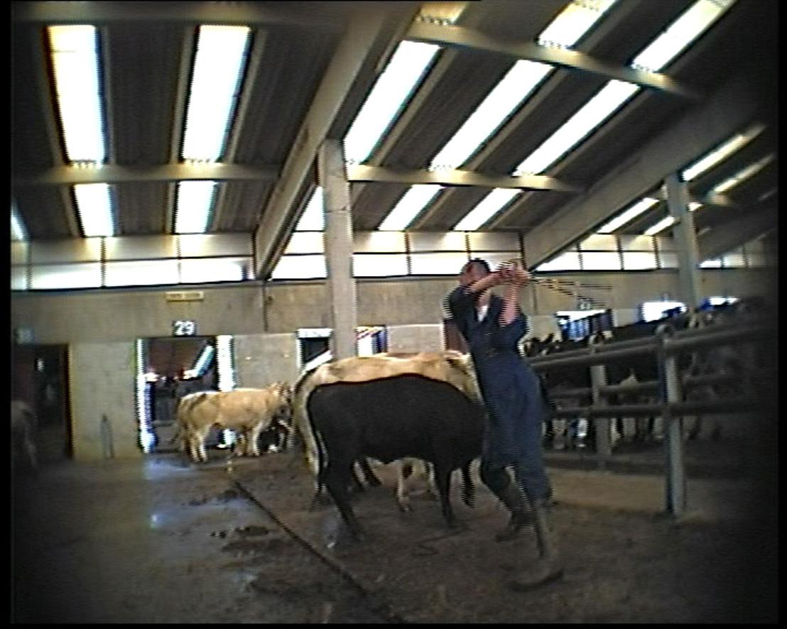 IPSOS-enquête in opdracht van GAIA: Vlaming wil zwaardere celstraffen voor dierenmishandelaars
