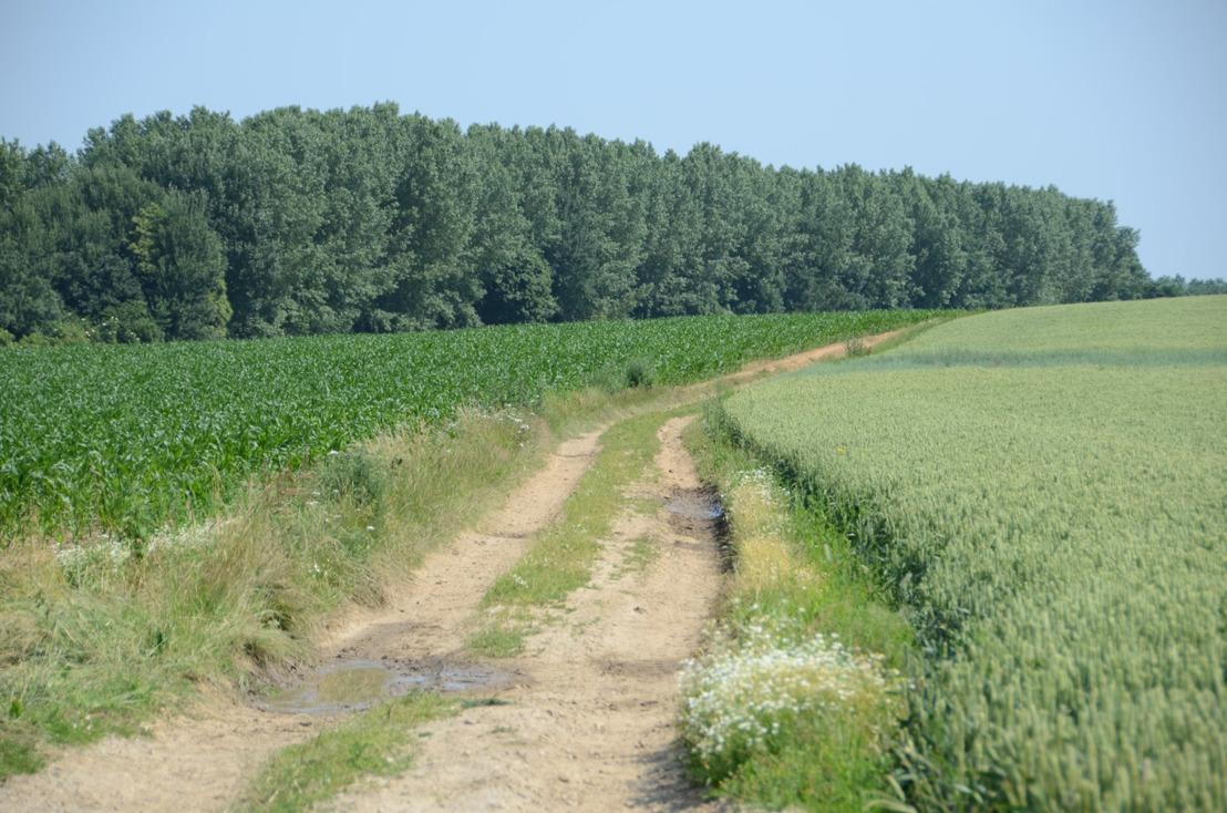 Betere landbouwwegen en fietspaden door ruilverkaveling Willebringen