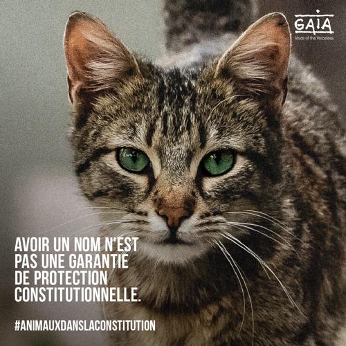 JOURNEE MONDIALE DES ANIMAUX - LE 4 OCTOBRE