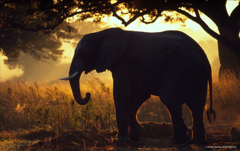 © Martin Harvey / WWF Regional