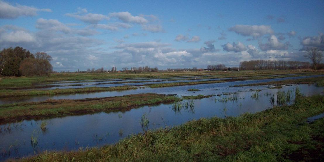 Waterpeilverhoging voor natuurherstel in het Blankaartbekken gaat nieuwe fase in