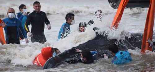 En menos de 48 horas logran salvar a dos ballenas varadas en la costa bonaerense