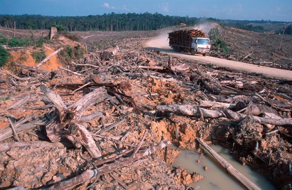 Preview: Europarlementariërs gaan voor energie-efficiëntie en klimaatbeleid, maar kiezen het foute pad op biomassa