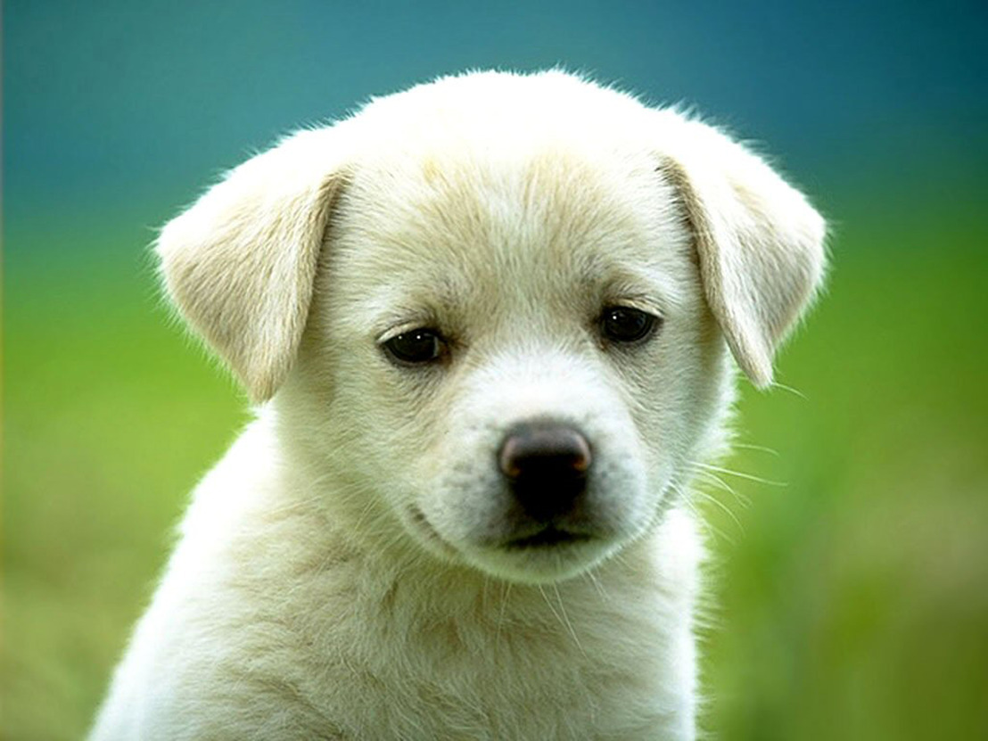 Dogs & Co krijgt geen dwangsom van €10.000 per dag