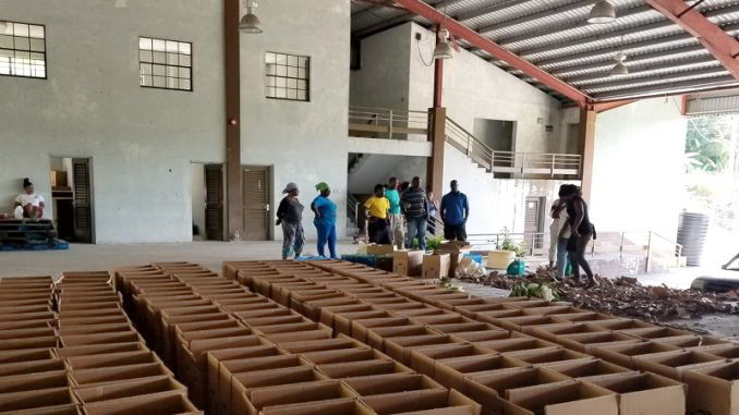 "Farmers prepare to pack ""Love Boxes"" in St. Vincent and the Grenadines"