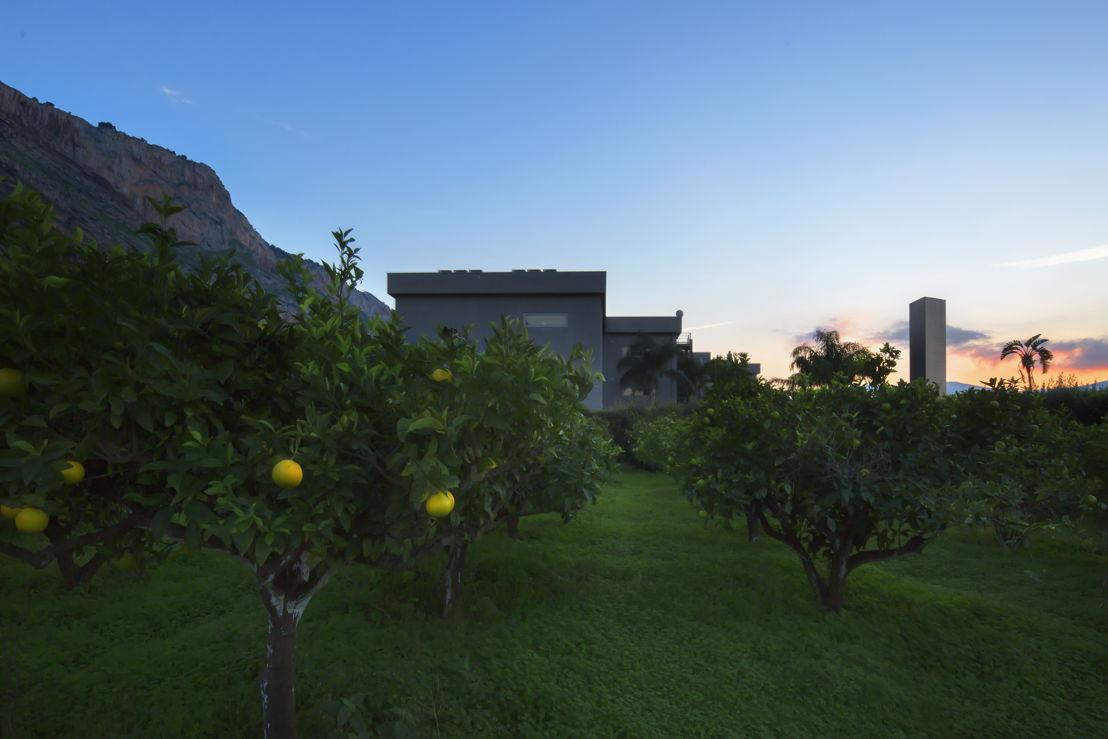 Citrus Grove - Mosaicoon Headquarter © Mosaicoon