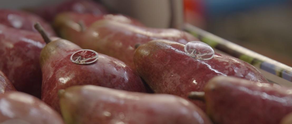 Première poire rouge foncée de Hesbaye en vente exclusivement chez Lidl