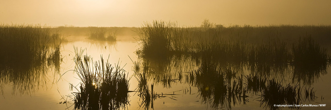 WWF campaign win: Spain must now commit to stop dredging inside outstanding wetland site
