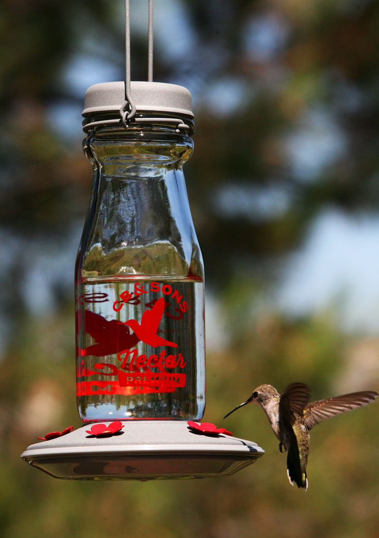 Hummingbird at feeder (photo credit to Pike Nurseries)