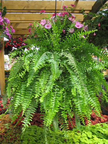 Fetch the hottest pet-safe houseplants at Pike Nurseries during National Indoor Plant Week, Sept. 14-19