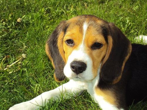 PERSBERICHT // RAAD VAN STATE: DOGS & FRIENDS MAG NOOIT NOG HONDEN KWEKEN