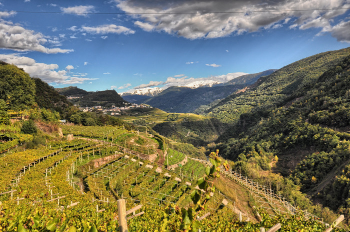 """Wine Region of the year"": il Trentino candidato da Wine Enthusiast"