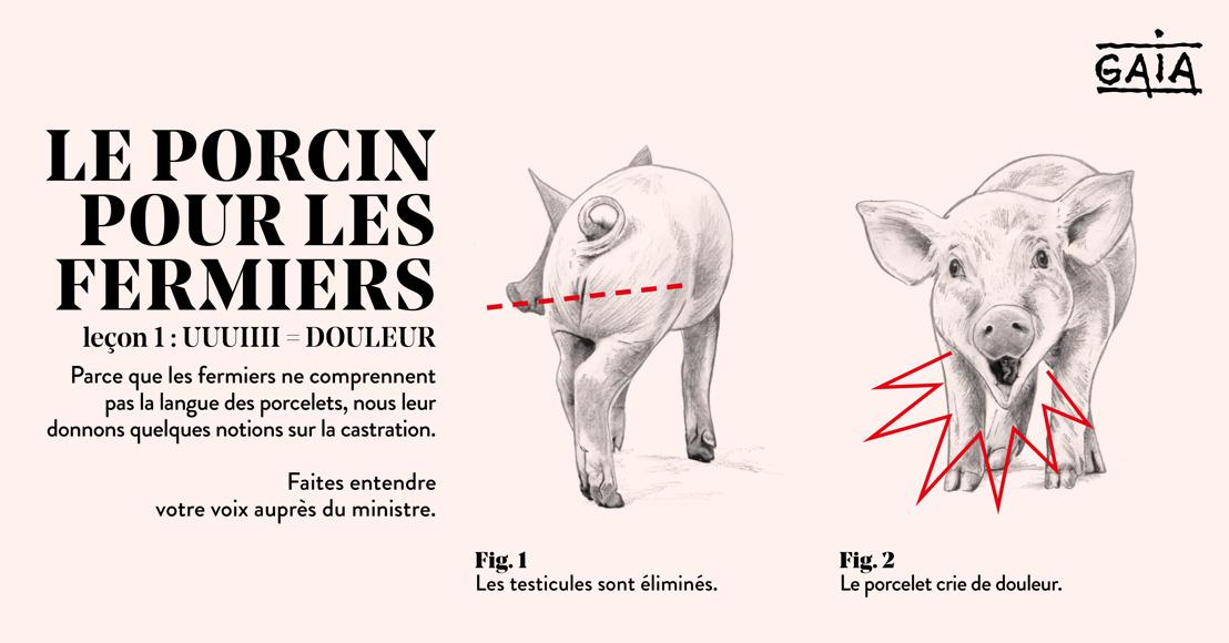 Action rentrée des classes : un cours de langue porcine destiné aux éleveurs