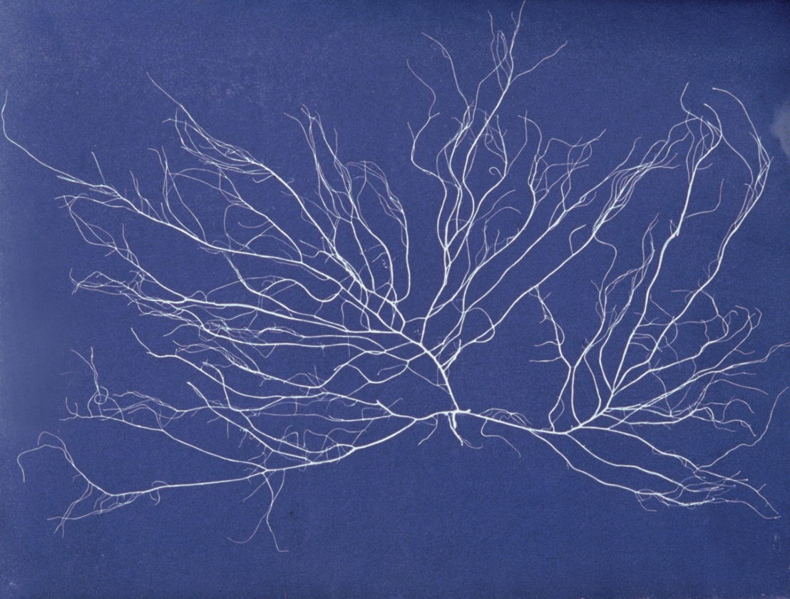Symposium Rituals in artistic practice - 23/03, image by Anna Atkins