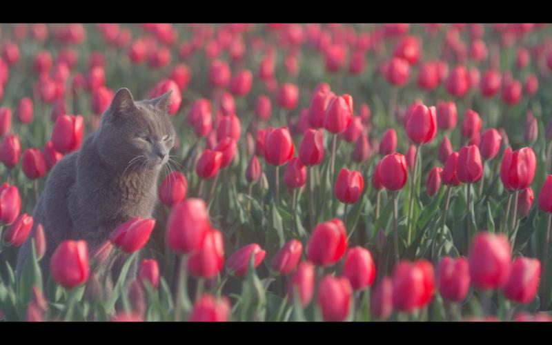 © Thalys 2014