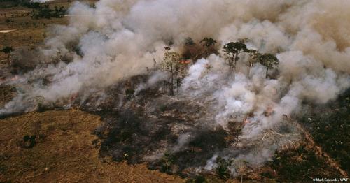 Het Amazonewoud brandt, maar de Braziliaanse president ontloopt zijn verantwoordelijkheid, zegt WWF