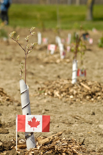 Forests Ontario and Highway of Heroes Collaborate to Honour Canadian Soldiers