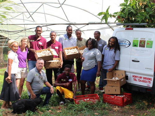The Caribbean's Only Youth-Owned Mushroom Farm Provides A Model For Business Success In Agriculture