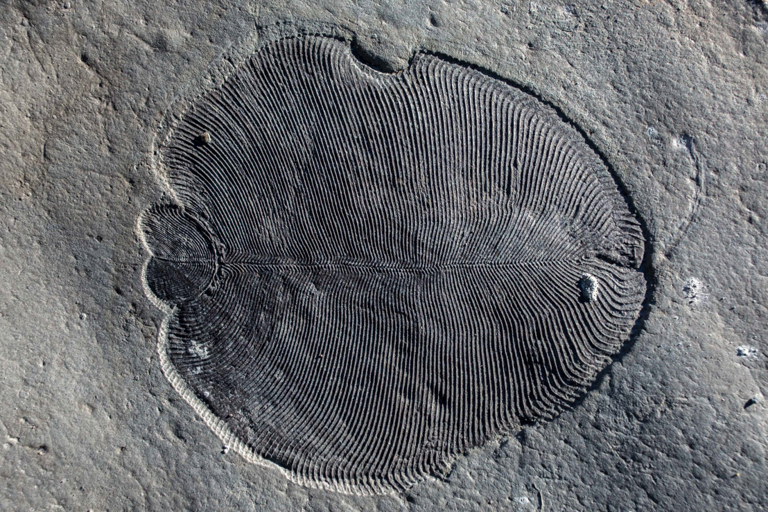 Researchers find Holy Grail of palaeontology – 558 million-year-old fat reveals earliest known animal