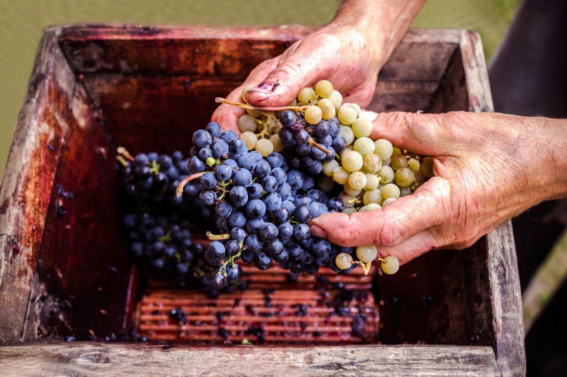 De druif van de toekomst