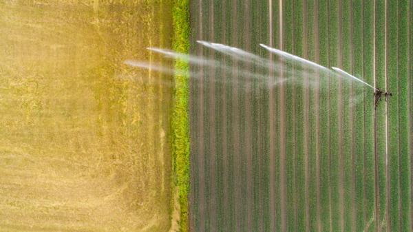 Preview: Bewässerung dämpft Hitzeextreme