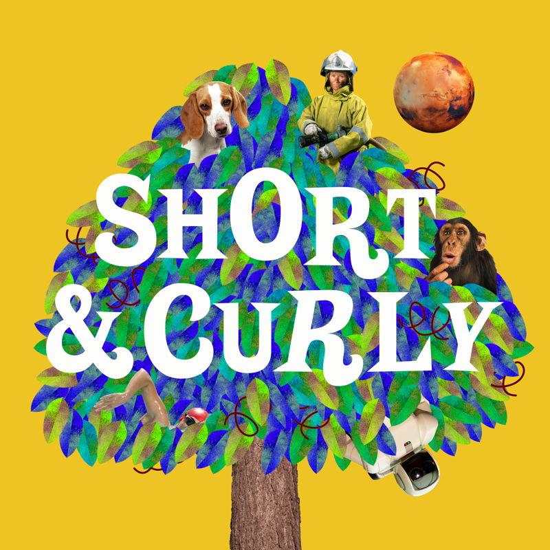 Short & Curly SQ