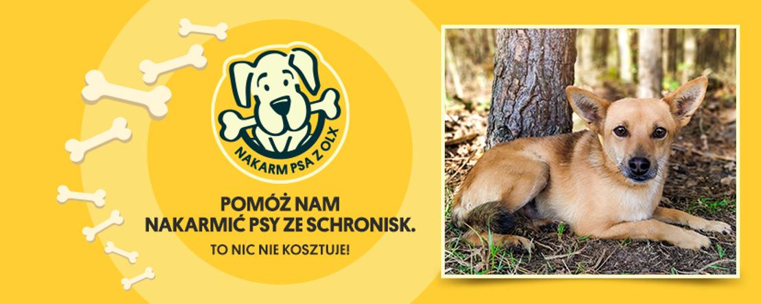 OLX rusza z 13. edycją akcji, w której cała Polska karmi psiaki. Dołącz do nas i kliknij w wirtualną łapkę!