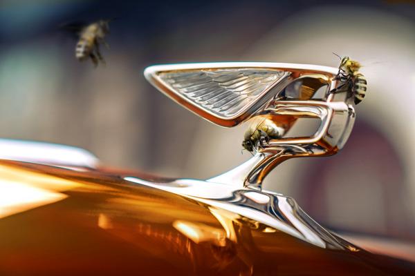 Preview: Des ruches chez Bentley Brussels
