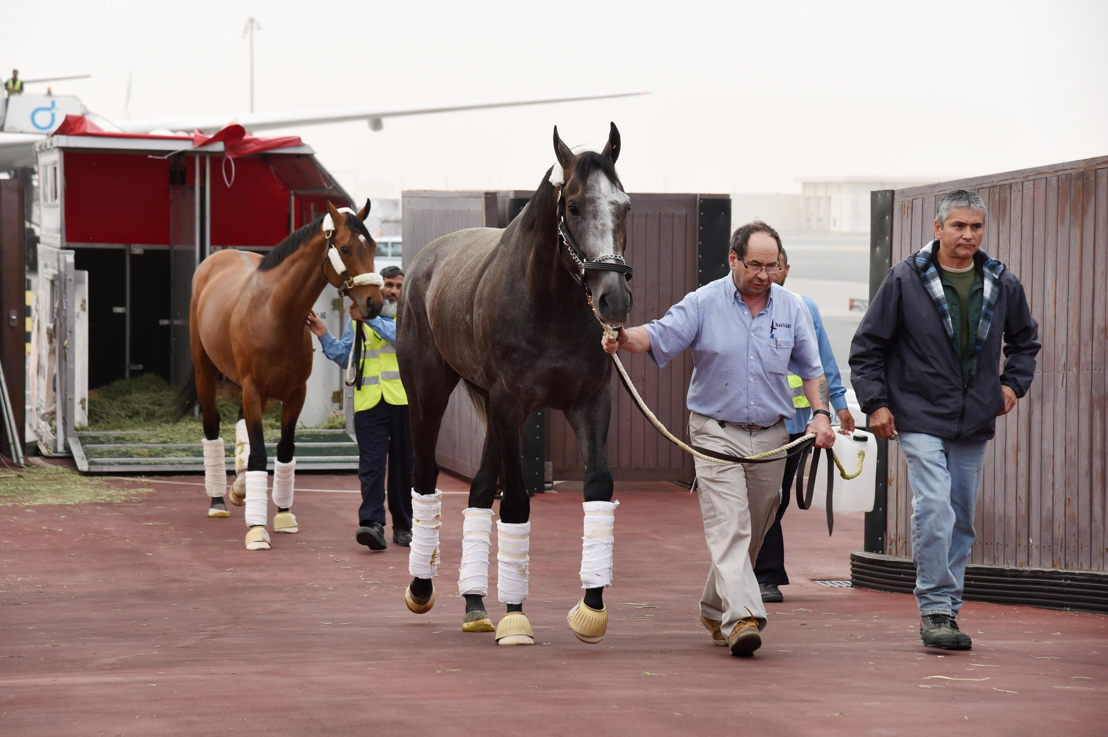 World's highest rated racehorse Arrogate arrived in Dubai after flying on Emirates SkyCargo
