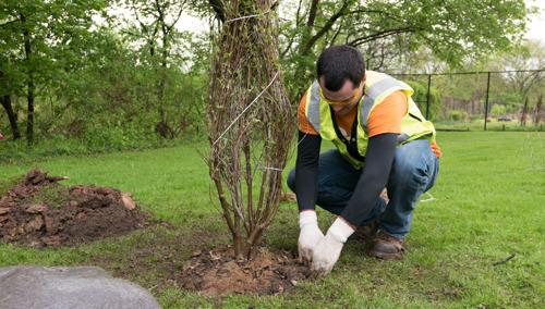 Duquesne Light Announces Tree Maintenance Plans for 2020