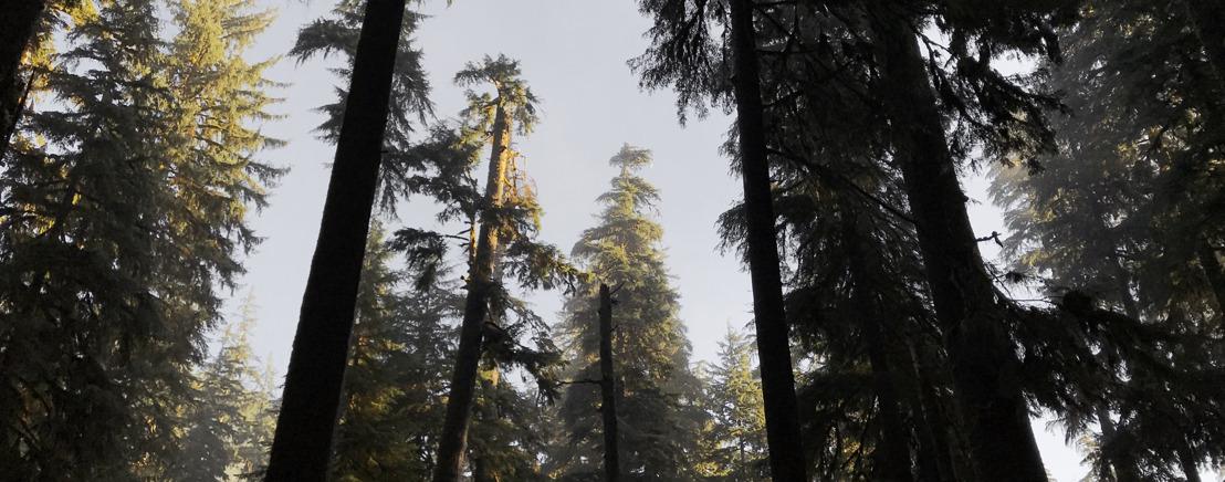 Paluu luontoon: äänitutkijaThomas Rex Beverly taltioi Kaskadivuoriston inspiroivia äänimaisemia Sennheiserin kanssa