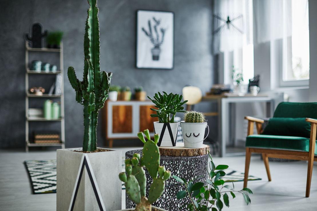 De Cactus Day is een nieuw concept dat vorm krijgt op dinsdag 21 november.
