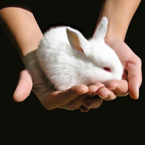 Cruelty Free Europe : une nouvelle coalition européenne contre l'expérimentation animale
