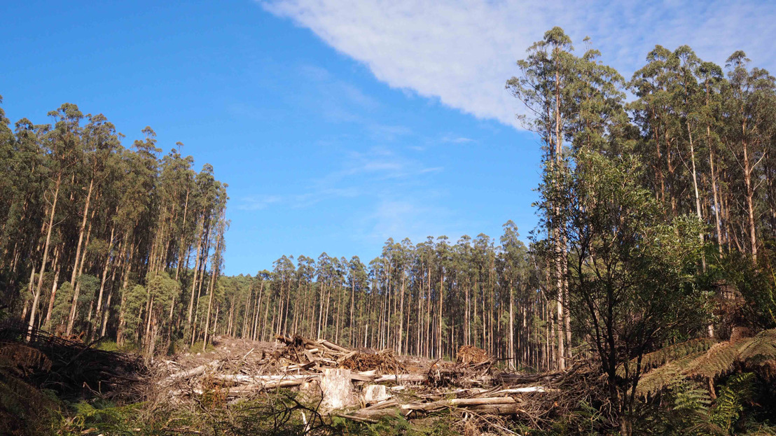 Forest soils need many decades to recover from fires and logging