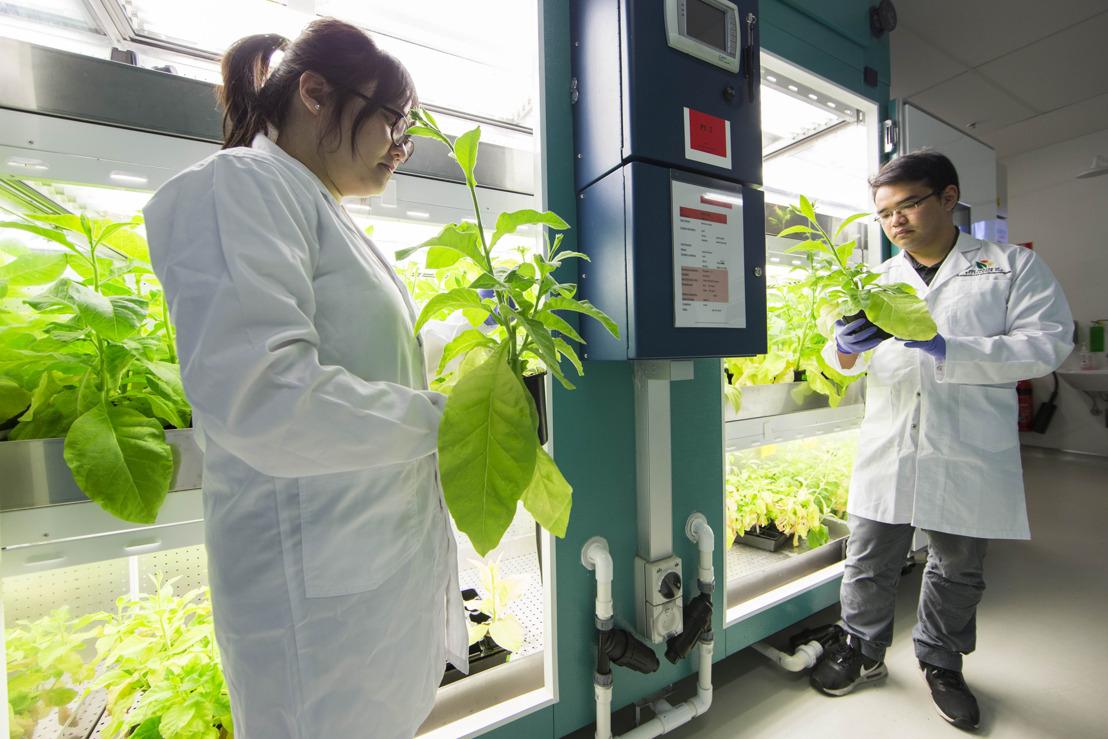Blue-green algae promises to help boost food crop yields