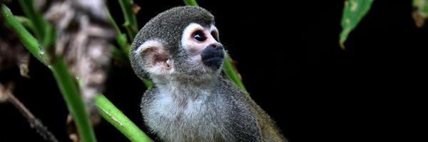 Preview: Inheemse groep vangt unieke beelden van fauna in Amazonegebied