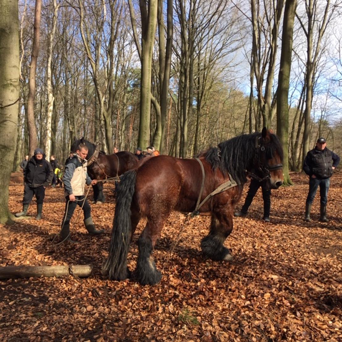 Provincie steunt activiteiten met Brabantse trekpaarden