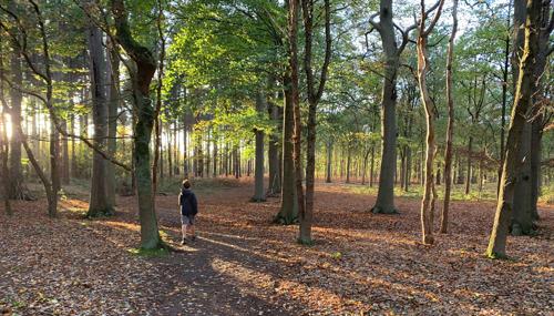 Meer bos voor Vlaanderen