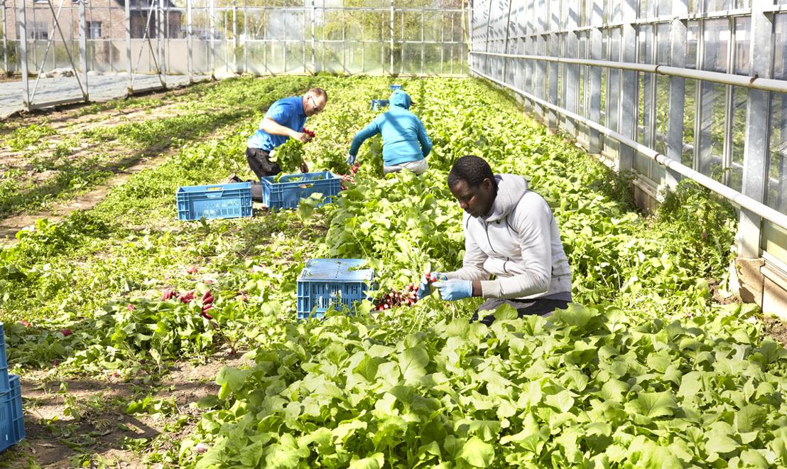 Colruyt Group zet in op meer lokale bio-producten door uniek partnerschap met bio-landbouwbedrijf De Lochting