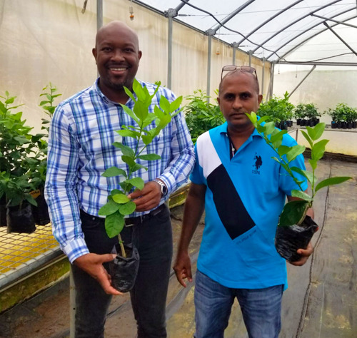 St. Vincent and the Grenadines Launches 2020 Citrus Replanting Initiative