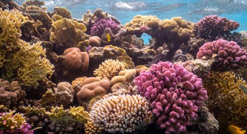 مشروع البحر الأحمر يخطو للأمام بتأسيسه شركة البحر الأحمر للتطوير