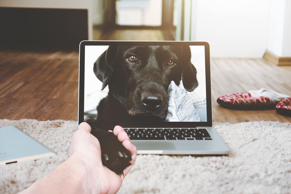 Claves para una política pet-friendly en tu espacio de trabajo