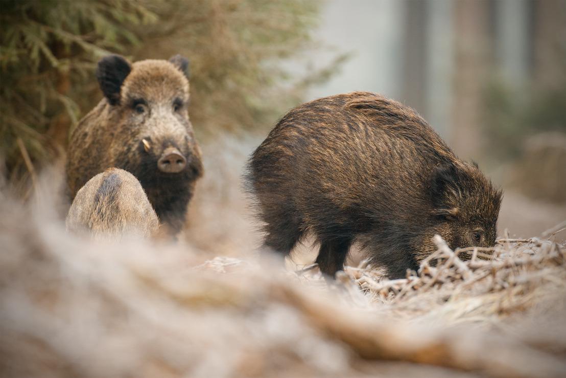 E-loket Fauna en Flora: vanaf nu schaderegistratie bejaagbare wildsoorten mogelijk